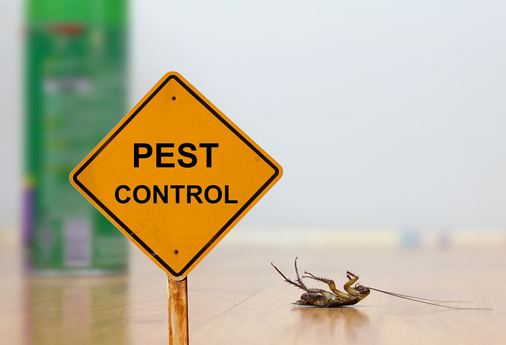 Pest Control Services for Central Florida