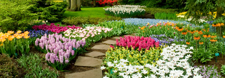 Commercial landscaping Land O Lakes