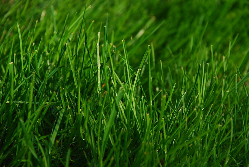 lawn care in Lithia