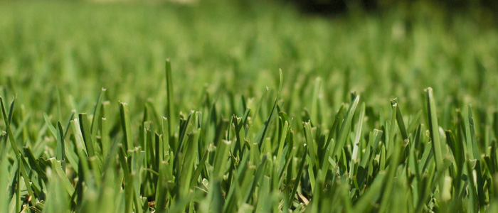 Lawn aeration in Tampa