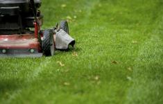 lawn-mowing-florida