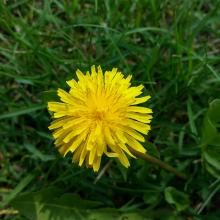 Managing Weeds in Your Lawn in Tampa